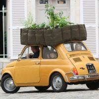 Fiat500©BACSAC-min